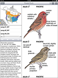 Sibley_purple_finch